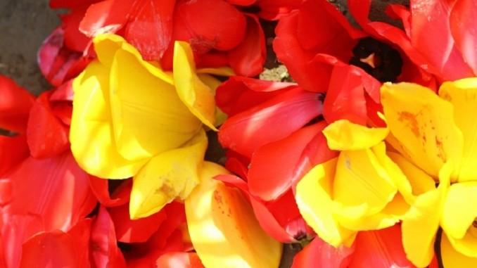 密生している花